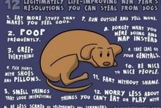 Goede voornemens voor hondenbaasjes!