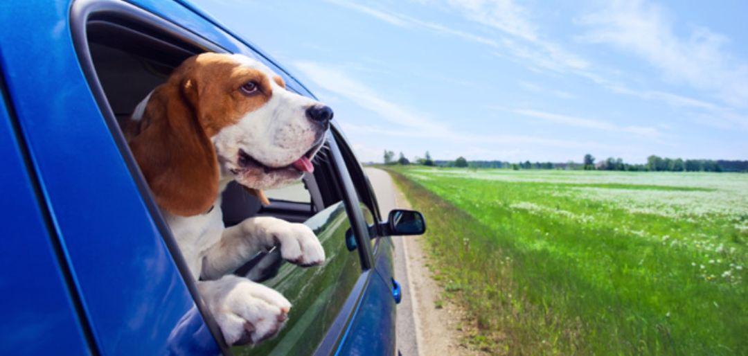 De hond mee op vakantie - De checklist