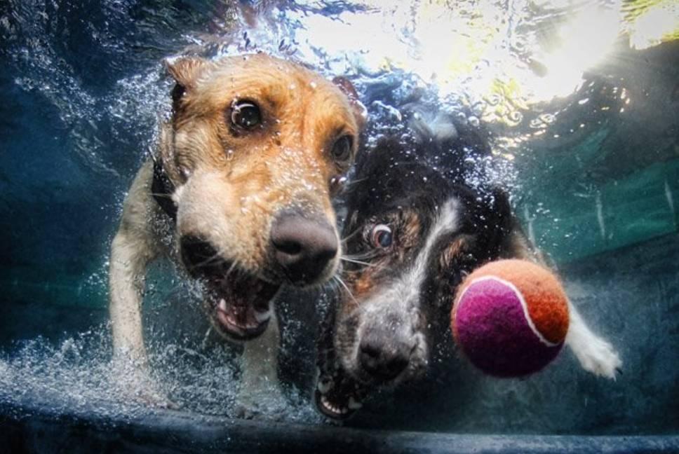 Speelgoed voor je hond