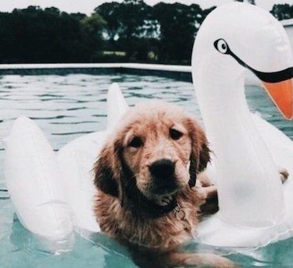 In de zomer eropuit met je hond