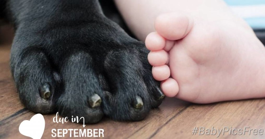 Hond en baby: je hond laten wennen aan de baby