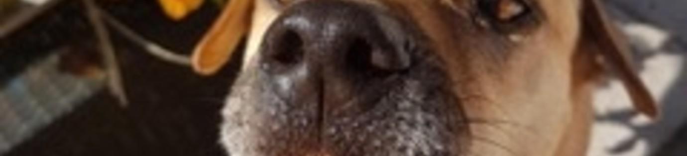Zelf hondenijsjes maken met dit hondenijsjes recept