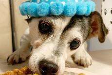 Hond jarig? Vier het met een Hondentaart