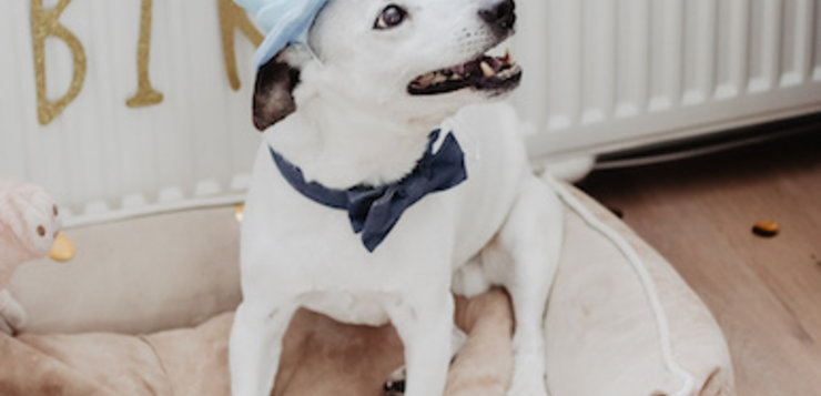 Hondentaart voor Duke