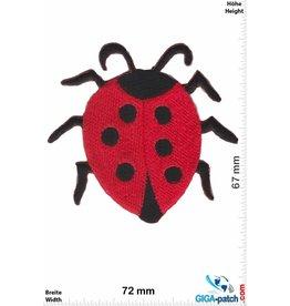 Bugs Marienkäfer - Ladybug