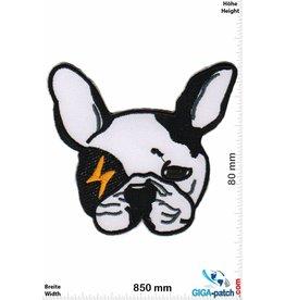 Bulldog Bulldog - Flash - Hunde