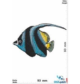 Fisch Fish - sea fish - blue black