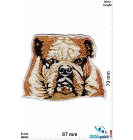 Bulldog Bulldog - Dog