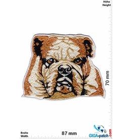 Bulldog Bulldog -  Hunde