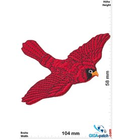 Red bird - Red Cardinal