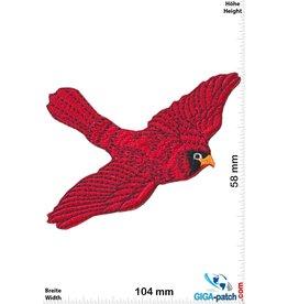 Roter Vogel - Roter Kardinal