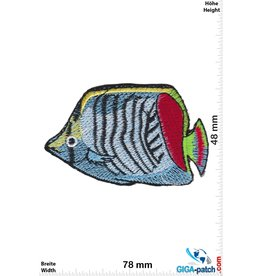 Fisch Fish - sea fish - blue red yellow