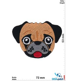 Hund young cute pug puppy - Dog