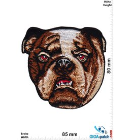 Bulldog Bulldog - Bulldogge - HQ Dog Head
