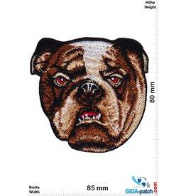 Bulldog Bulldog - Bulldogge - HQ Hunde- Kopf