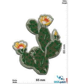 Cactus Kaktus - Blüte