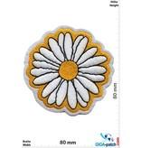 Daisies -  Margerite - Flower