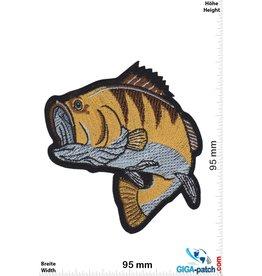 Fisch Barsch - Angeln Fischen - gelbbraun