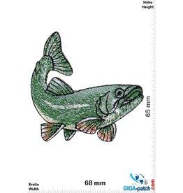 Bass - Perch - fishing