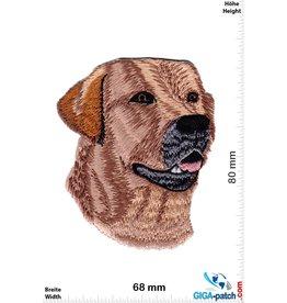 Labrador - dog head