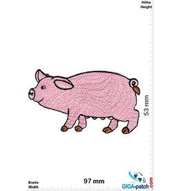 Schwein Pig