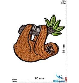 Sloth - Animal
