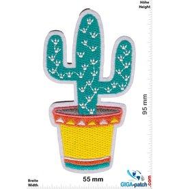 Fun Cactus in the pot