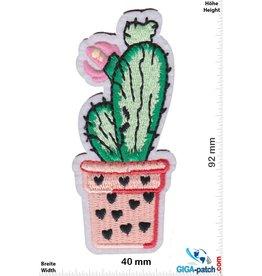 Fun Kaktus im Blüte