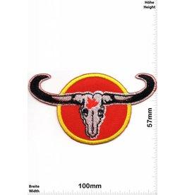 Bison Buffalo Bison - Stierhörner