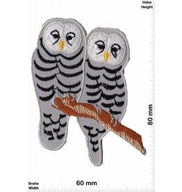 Eule two 2 Owl