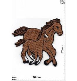 Pferd 2 Pferde