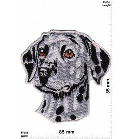 Hund Dalmatiner - HQ  Dog