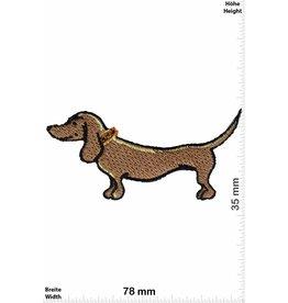Hund Dackel - Hund