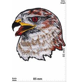 Adler Adler Adlerkopf - Eagle