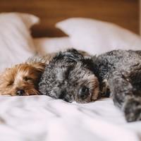 5 Theorieën over het nut van slapen