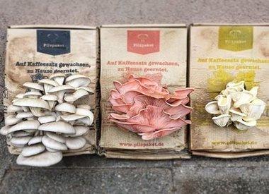 Produkte von Pilzpaket