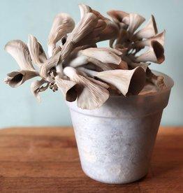 Pilzpaket Florida Austernpilze Blumentopf Pilzzuchtset