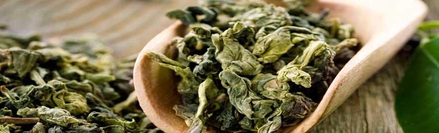 ...handverlesene Grüne Tees...