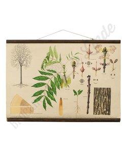 Botanische schoolplaat es