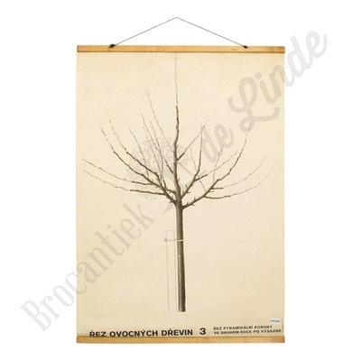 Schoolplaat snoeien van fruitbomen