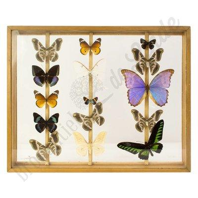 """Vlinderlijst vlinders XL """"No.1"""""""