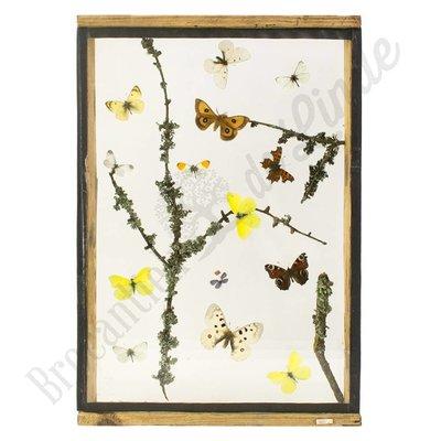 """Vlinderlijst Europese vlinders """"No. 5"""""""