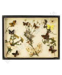 """Vlinderlijst Europese vlinders  """"No. 7"""""""