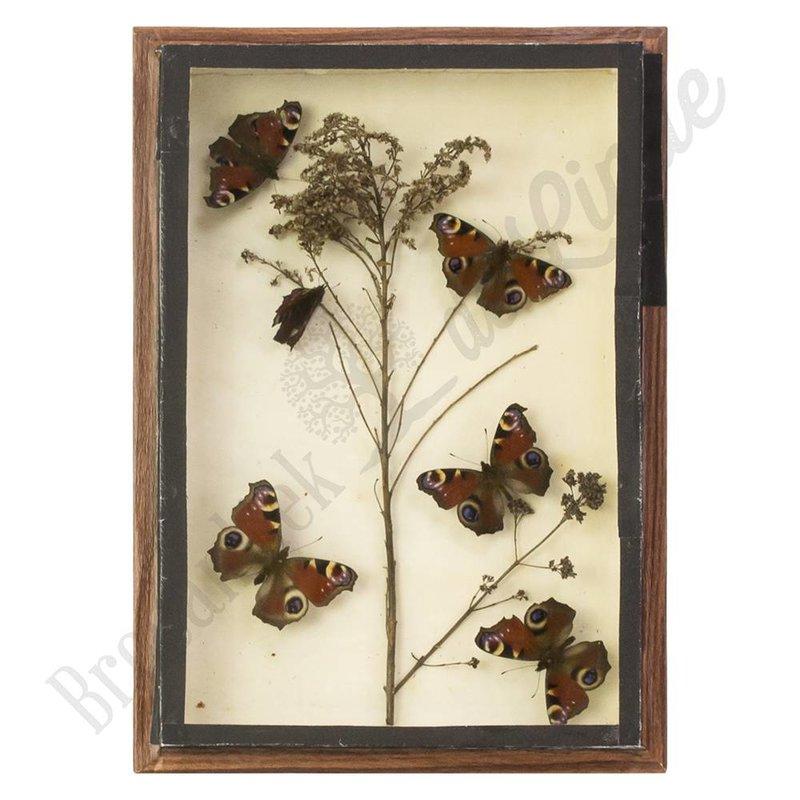 """Vintage vlinderlijst dagpauwoog vlinders """"No. 8"""""""