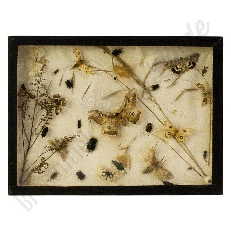 """Oude vlinderlijst met verschillende vlinders en kevers """"No. 10"""""""