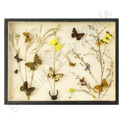 """Vlinderlijst verschillende vlinders """"No. 12"""""""
