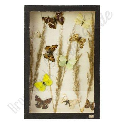"""Vlinderlijst Europese vlinders """"No. 15"""""""