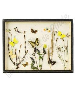"""Vlinderlijst Europese vlinders """"No. 17"""""""