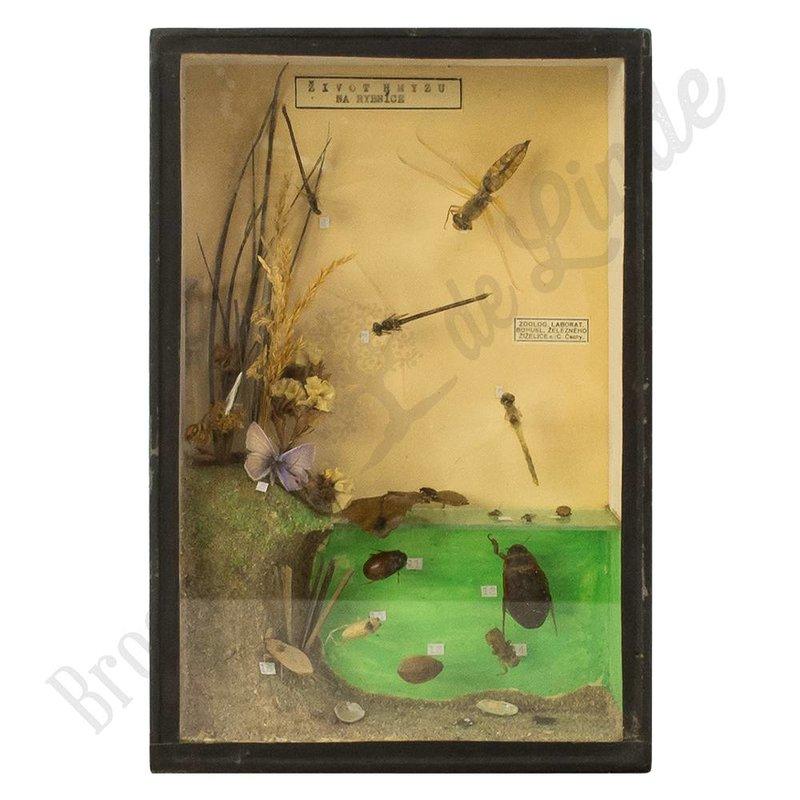 """Vintage vlinderlijst """"Het leven van insecten"""""""