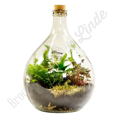 "Plant terrarium ""Urban Jungle - large"""